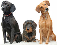 MeadowSweet Pet Care and Boarding is located in beautiful Wilmington North Carolina.  We care for your puppies and dogs like they were our own.